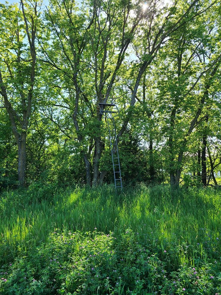 food plot projects